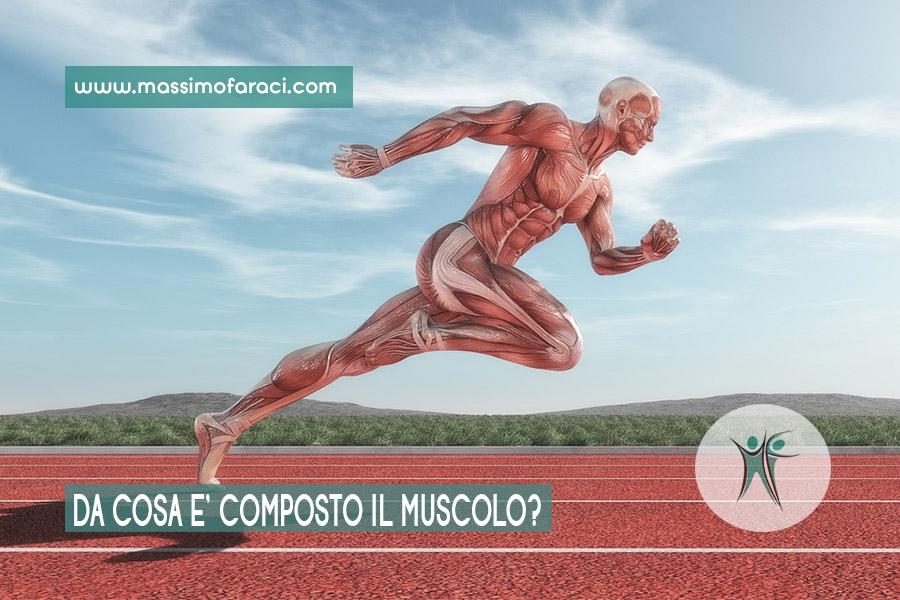 Il muscolo e la sua composizione.