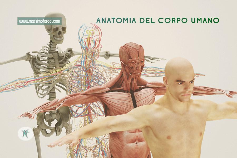 Anatomia del corpo umano